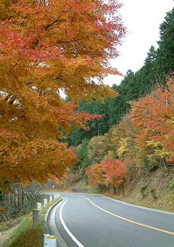 秋の滋賀県の紅葉は美しい「奥比叡ドライブウェイの紅葉」/大津市