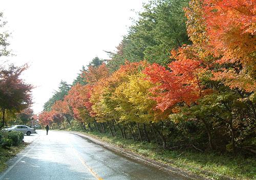 秋の滋賀県は奥琵琶湖から始まる「奥琵琶湖パークウェイの紅葉」/長浜市