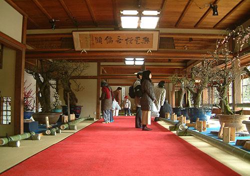 冬の滋賀県 長浜に新春の到来を告げる「長浜盆梅展」