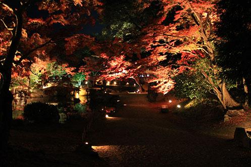 秋の滋賀県を彩る「錦秋の玄宮園ライトアップ」/彦根市