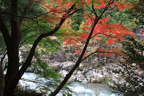 秋の滋賀県が燃える滝の宮「大蛇ヶ淵の紅葉」/多賀町