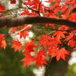気候の良い秋の滋賀県はイベントがいっぱい!秋の滋賀県を楽しもう