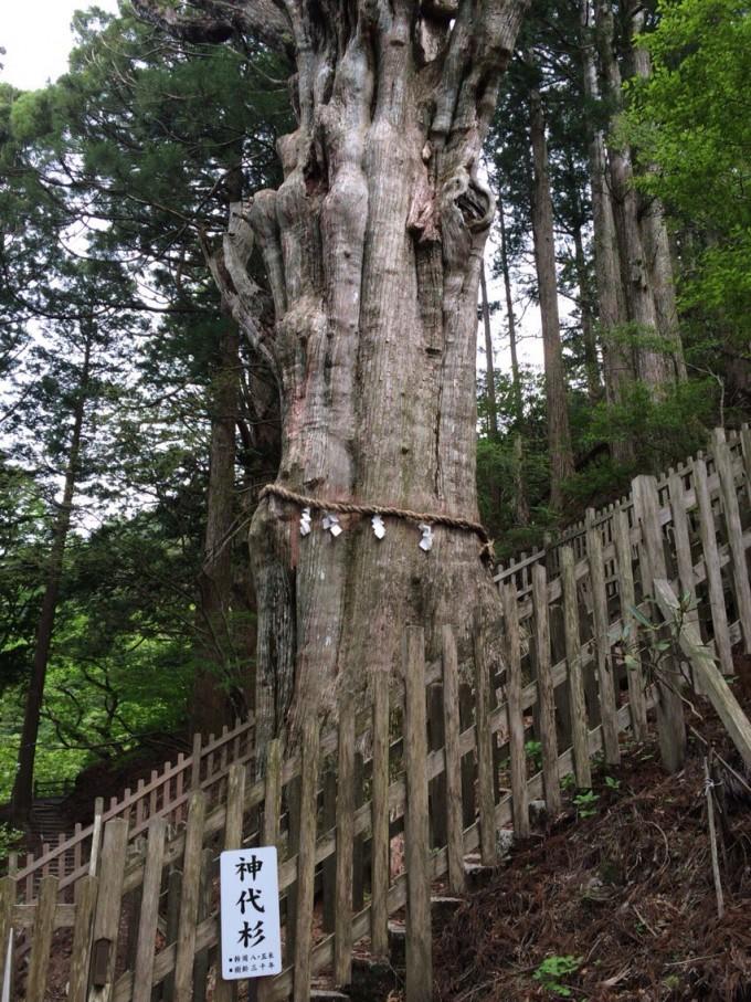 玉置神社 奈良 大杉