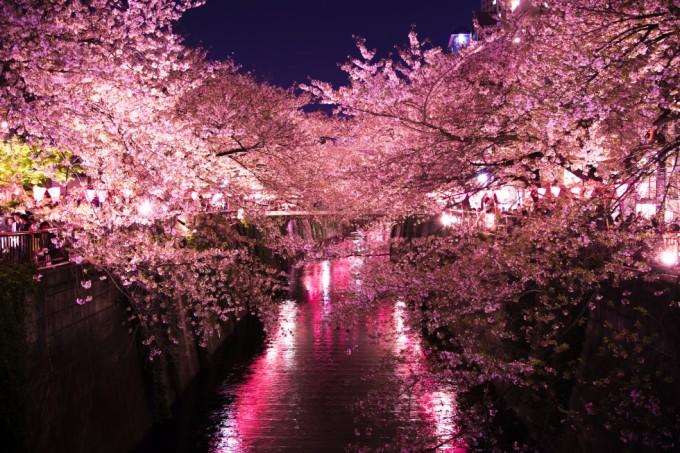 目黒川 夜桜