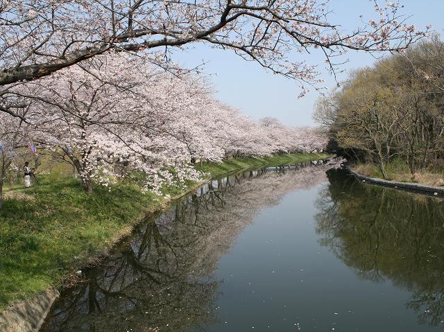 福岡堰(つくばみらい市)
