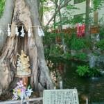 【埼玉県】開運間違いなし! パワースポットとして知られる神社10選