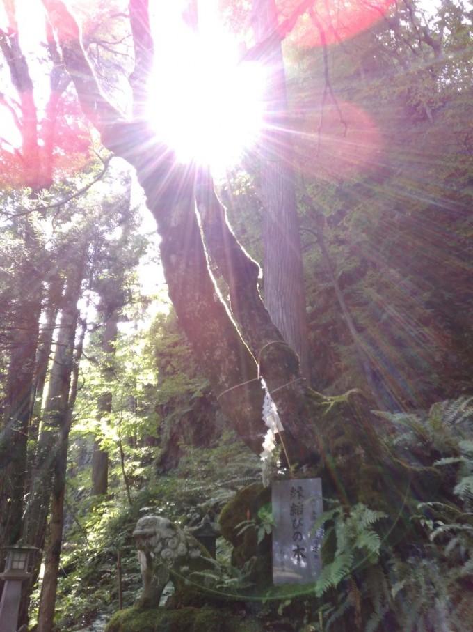 三峰神社 縁結びの木