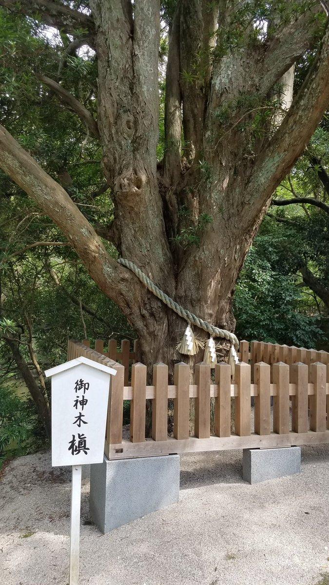 安房神社 ご神木