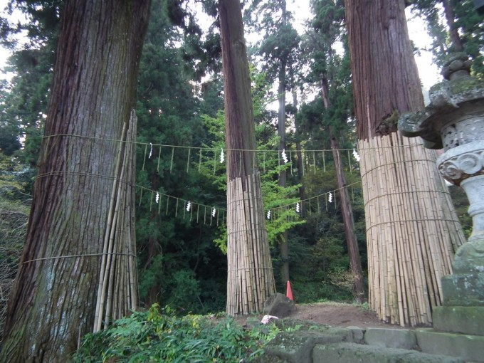 妙義神社 三本杉