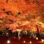 埼玉県でおすすめの紅葉スポットを厳選