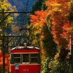 神奈川県でおすすめの紅葉スポットを厳選