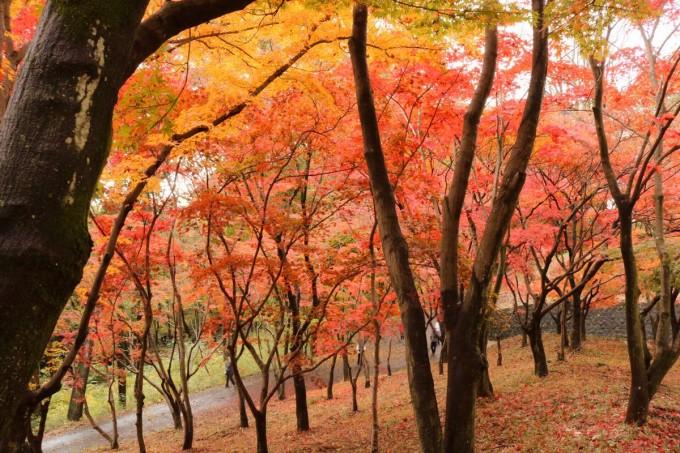 織姫公園 紅葉