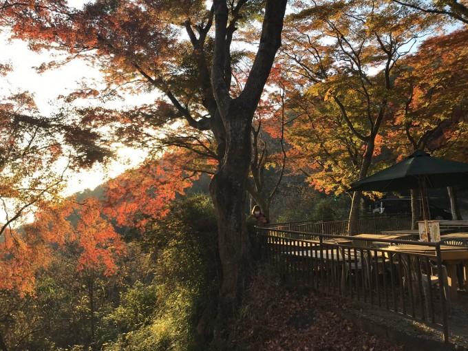 大平山 栃木 展望台 紅葉