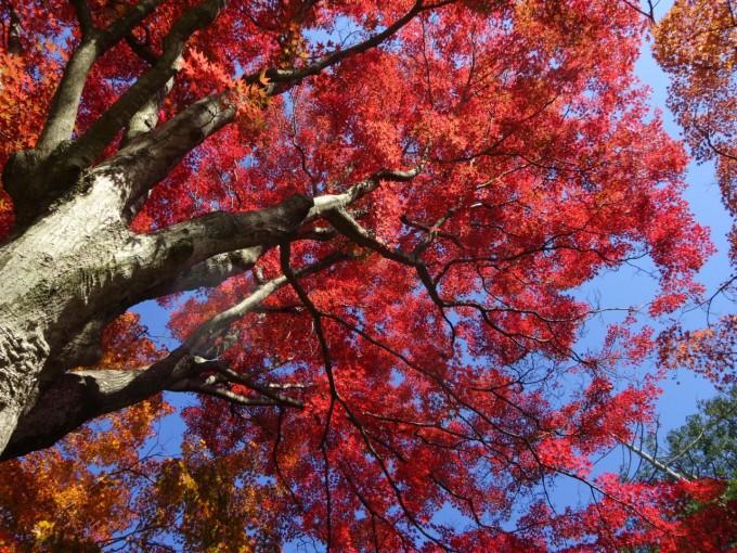 大平山神社 紅葉 栃木