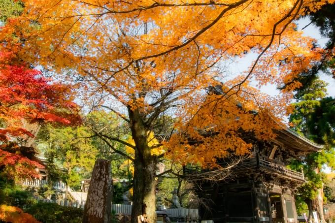 筑波山神社 紅葉
