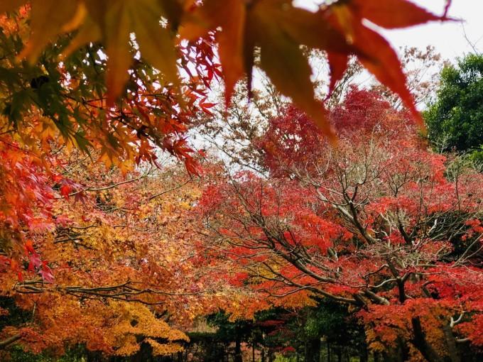 柏の葉公園 紅葉