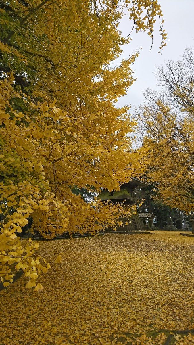 茨城 西蓮寺 紅葉