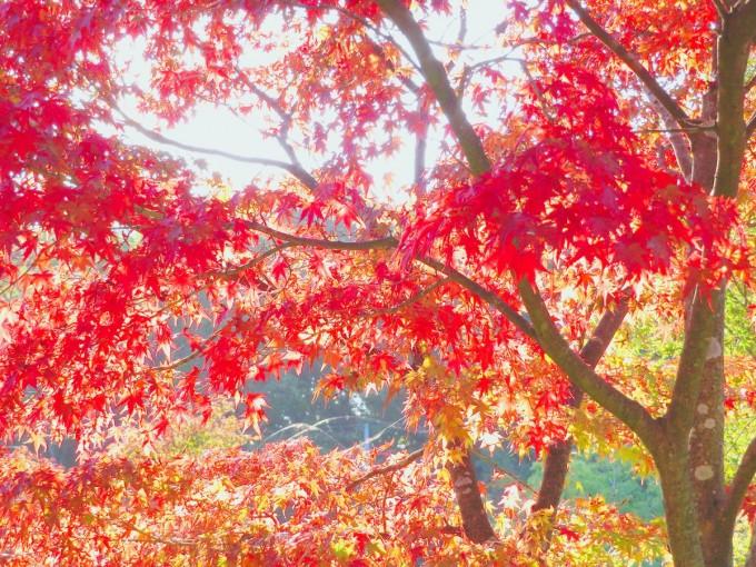 北山公園 紅葉