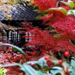 千葉県でおすすめの紅葉スポットを厳選