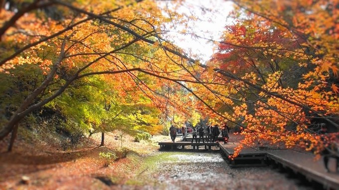 濃溝の滝 紅葉