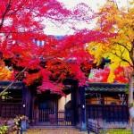 茨城県でおすすめの紅葉スポットを厳選