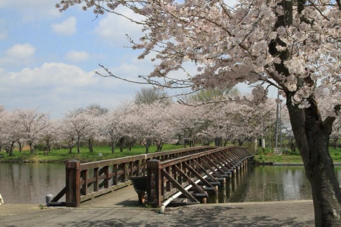 吉野公園 茨城
