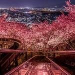 神奈川県でおすすめのお花見スポットを厳選