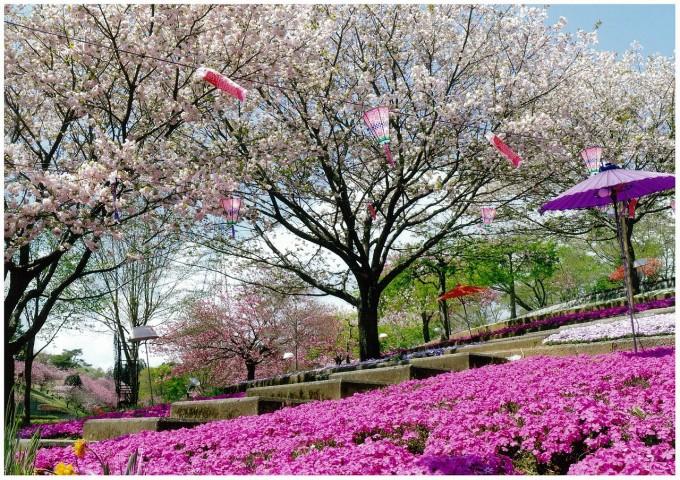 静峰ふるさと公園 桜