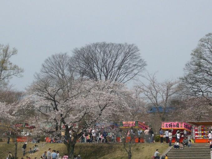 壬生町総合公園 桜 栃木