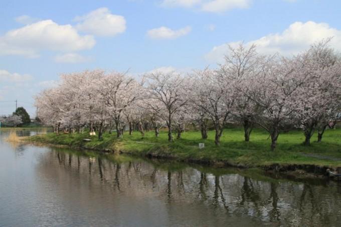 吉野公園 常総市