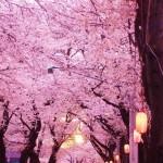 千葉県でおすすめのお花見スポットを厳選