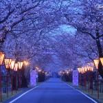 九州各県お花見厳選スポット情報