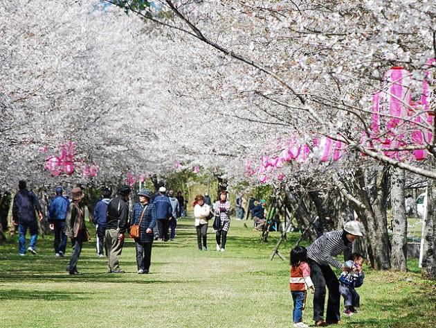 忠元公園(鹿児島県伊佐市) 桜の名所