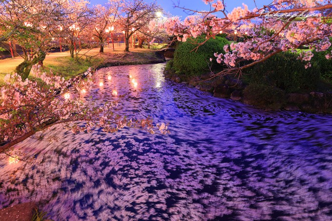 小城公園 (佐賀県小城市)  桜の名所