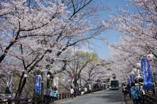 熊本城(熊本県熊本市)  桜の名所