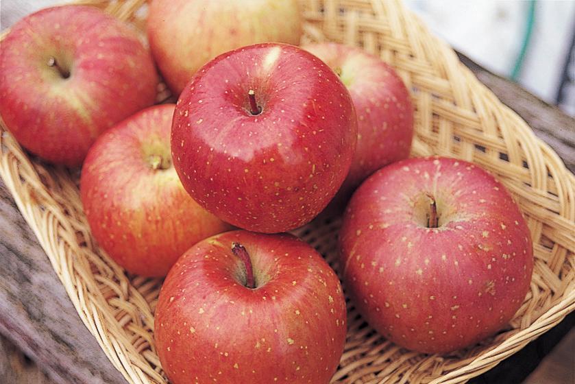 嘉麻市りんご