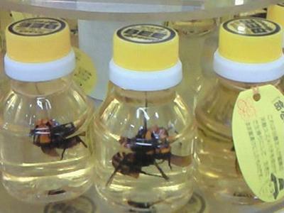 命を懸けてスズメバチ