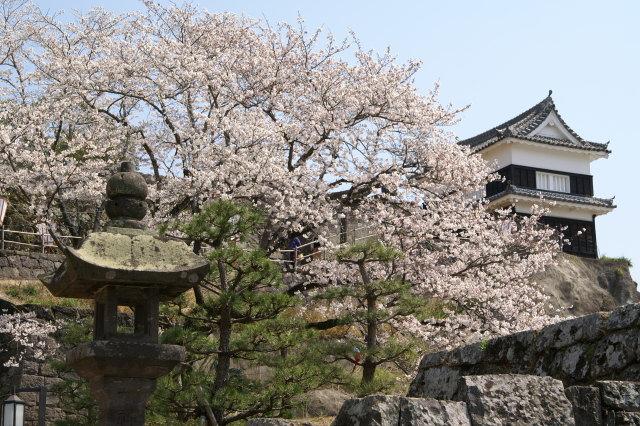 桜 うすき