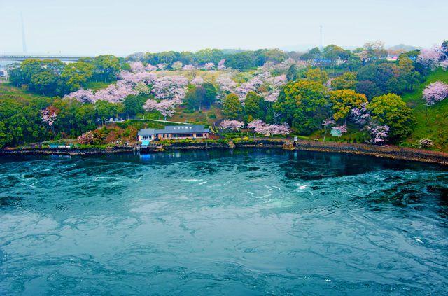うず潮と桜