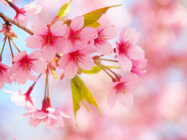 お花見シーズン到来!九州のお花見スポットを厳選