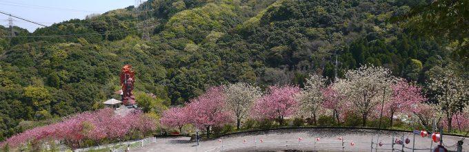 桜 一心寺