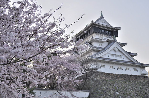 桜 小倉城