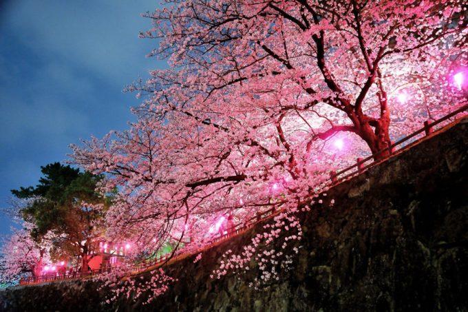 桜 小倉城2
