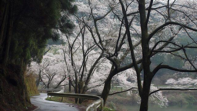 桜 日向神2