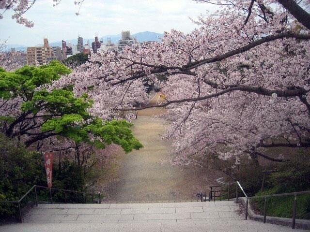 桜 西公園