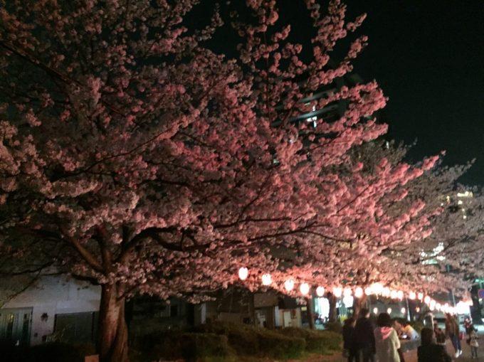 桜 西公園2