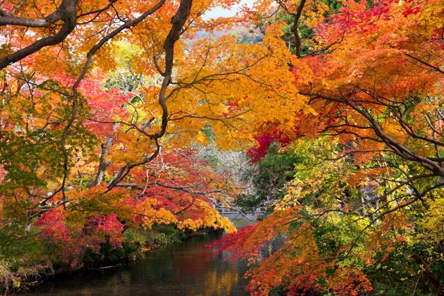 金鱗湖紅葉