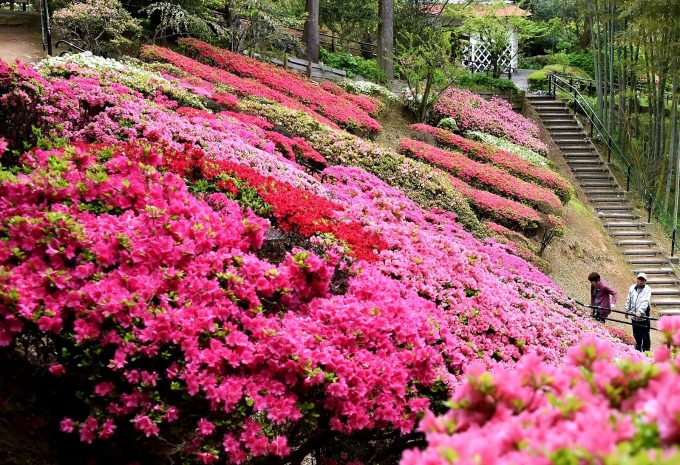 北九州市立白野江植物公園