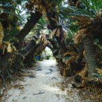 徳之島のおすすめ観光スポットを厳選