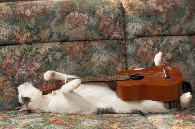 のんねむ猫